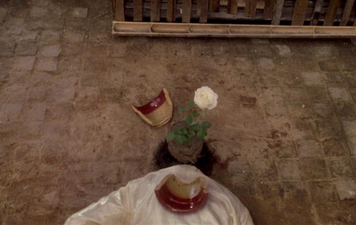 The plant pot lands a riot!