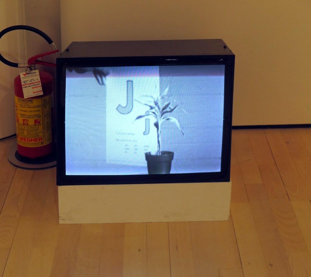 John Baldessari - Teaching a plant the Alphabet - 1972