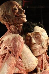 bodyworlds lichamen