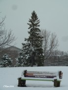 park-bench-and-tree