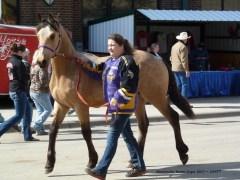 buckskin horse 4-2017