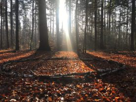 Berken-cirkel (C4 van Antoon Loomans) in het herfstbos