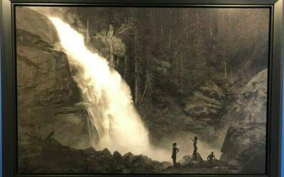 Im Wald van Erwin Olaf