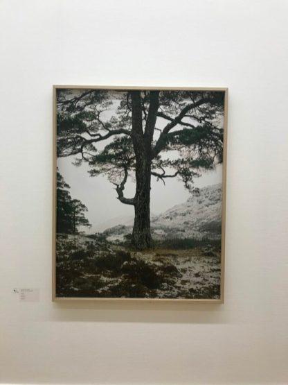 Foto Jeroen Toirkens Boom in Borealis tentoonstelling. Boreal Tree #25 Schotland, Glenn Affric.