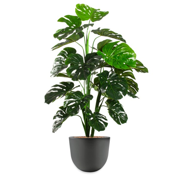 HTT - Kunstplant Monstera in Eggy antraciet H130 cm - kunstplantshop.nl