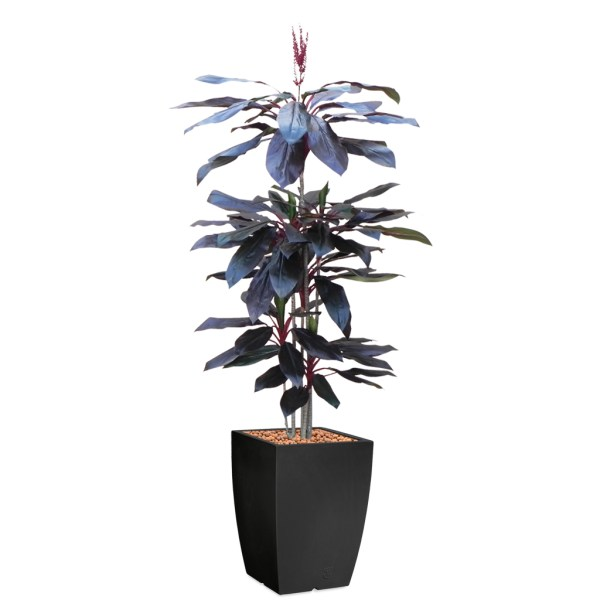 HTT - Kunstplant Cordyline rood in Genesis vierkant antraciet H220 cm - kunstplantshop.nl