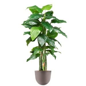 HTT - Kunstplant Philodendron in Eggy taupe H215 cm - kunstplantshop.nl