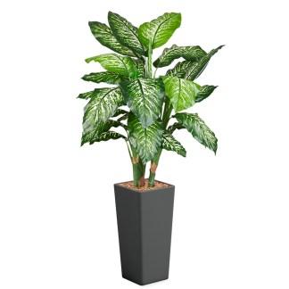 HTT - Kunstplant Dieffenbachia in Clou vierkant antraciet H185 cm - kunstplantshop.nl