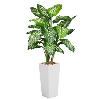HTT - Kunstplant Dieffenbachia in Clou vierkant wit H185 cm - kunstplantshop.nl