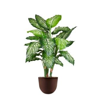 HTT - Kunstplant Dieffenbachia in Eggy bruin H130 cm - kunstplantshop.nl
