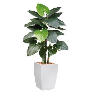 HTT - Kunstplant Philodendron in Genesis vierkant wit H150 cm - kunstplantshop.nl