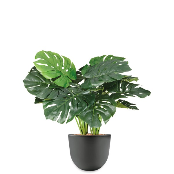 HTT - Kunstplant Monstera in Eggy antraciet H70 cm - kunstplantshop.nl