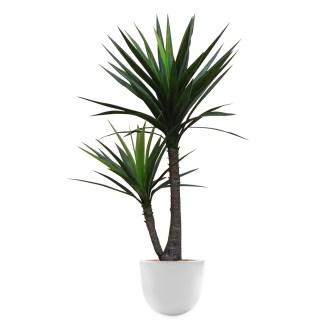 HTT - Kunstplant Yucca in Eggy wit H130 cm - kunstplantshop.nl