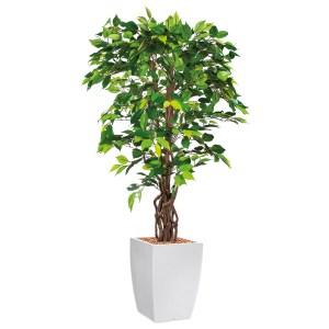 HTT - Kunstplant Ficus in Genesis vierkant wit H165 cm - kunstplantshop.nl