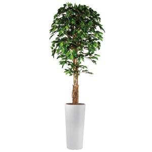 HTT - Kunstplant Ficus in Clou rond wit H250 cm - kunstplantshop.nl