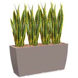 HTT - Kunstplant Sansevieria in Genesis cassetta taupe H110 cm - kunstplantshop.nl