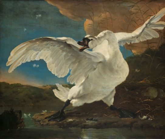 Jan Asselijn - De bedreigde zwaan
