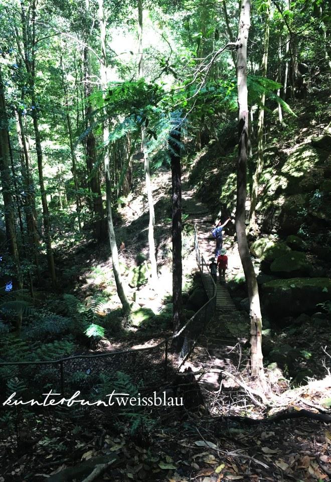 bluemountains-hike