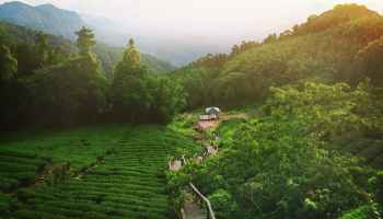green plantations near forest and stairway near house