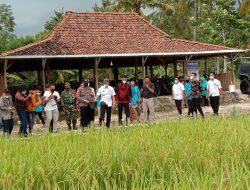 Bupati Sunaryanta Bakal Integrasikan Mina Padi Kalurahan Pulutan Jadi Wisata Internasional
