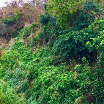 梯梧隊と瑞泉隊が従事した「ナゲーラ壕」