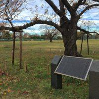 かつて飛行機が造られていた!?武蔵野市の「武蔵野中央公園」