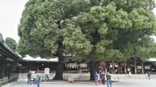 Meiji Shrine Honden