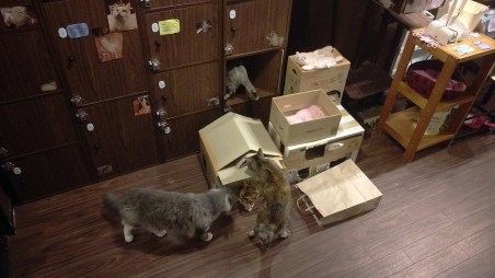 Cats and Cardboards