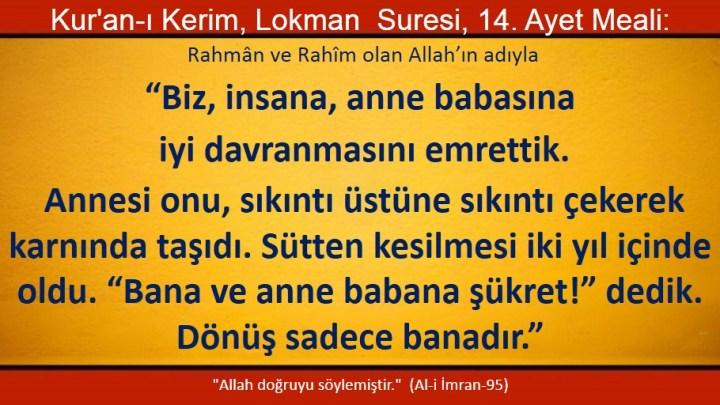 lokman 14