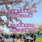 舎人公園桜の花見