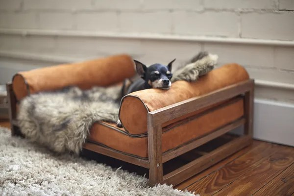 Small-The-Aldo-Pet-Lounger-by-Architect-Pets-with-Zoey-on-the-Wooden-Floor-near-Wide-Grey-Rug