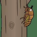 蝉の幼虫 ヤゴ