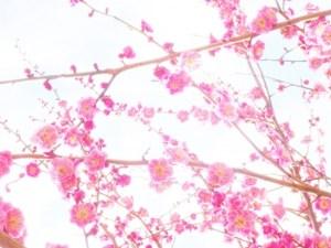 いつまで 新春
