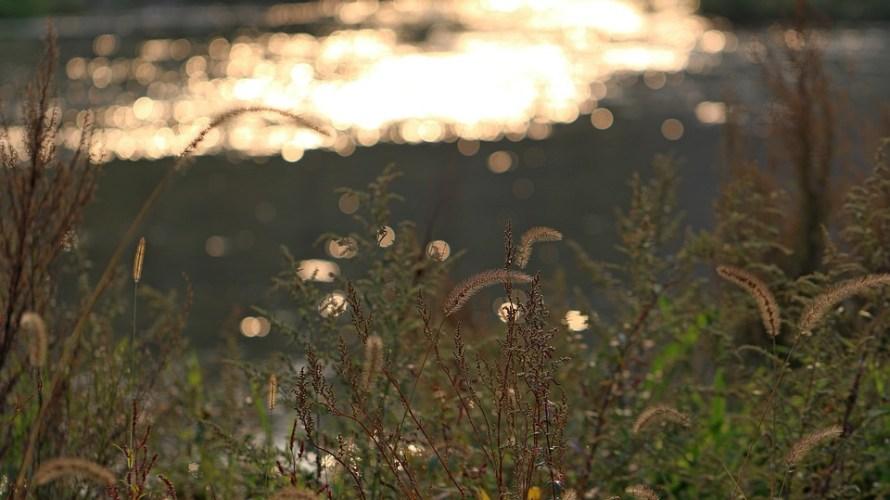 自称『川のあるアクアテラリウム』で川辺の風景を撮る