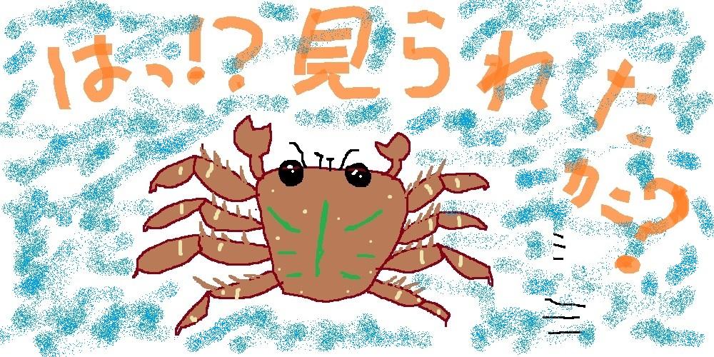 トゲアシガニ コケ 飼育 餌 混泳 肉食