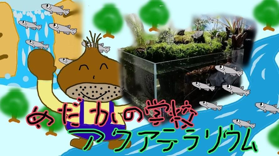 めだかの学校アクアテラリウム水槽の作成その5 植栽完了 後はめだか待ち