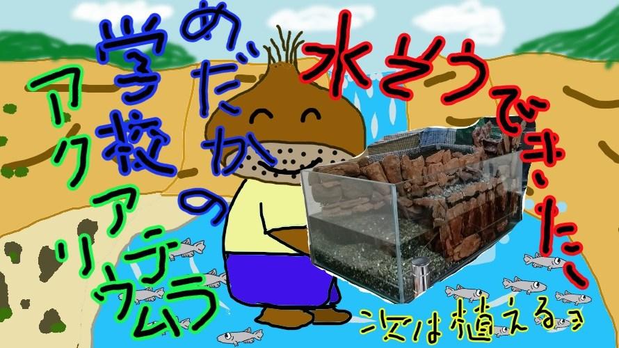 めだかの学校アクアテラリウム水槽の作成その4 ウホーィ!水槽完成!!