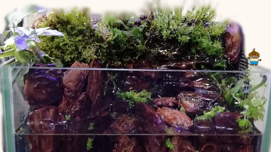 岩清水のあるアクアテラリウム水槽の作り方 完成編 暖かいベタのおうちをつくろう