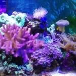 アップで撮ったらめっちゃ綺麗 海水魚水槽のソフトコーラル