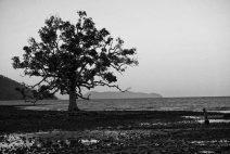 tree-1024x683