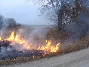 Złośliwe podpalanie trawy na wiosnę jest bardzo szkodliwe dla ludzi i przyrody