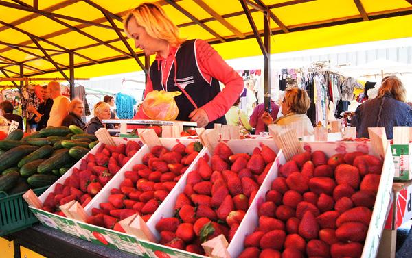 Rozpoczyna się  sezon truskawkowy