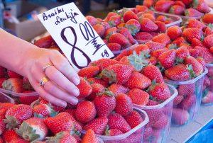 Za kilogram hiszpańskich truskawek należy zapłacić 7 litów, polskie truskawki są o lit droższe Fot. Marian Paluszkiewicz