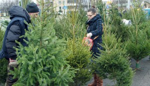 Jeszcze tylko parę dni mamy na znalezienie zielonego drzewka Fot. Marian Paluszkiewicz