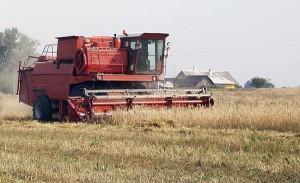 Obecnie nasze pola wyglądają o wiele lepiej niż w czasach kołchozów Fot. Marian Paluszkiewicz