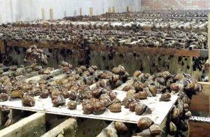 Hodowla ślimaków jest przyszłościowym biznesem