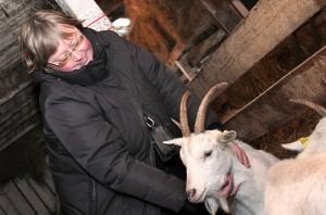 Kozy trzeba głaskać, przytulać, wyczesywać im sierść, podcinać racice. Pieszczoty i troskliwość łagodzą ich temperament Fot. Marian Paluszkiewicz