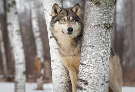 Zwierzęta zimą – bliżej nas