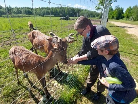 Deer SPA – sposób na terapię z jeleniami