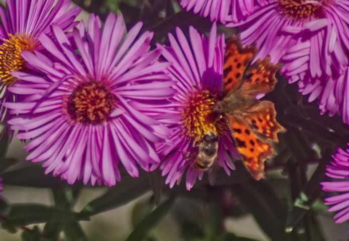 Pszczoły i zapylacze zagrożone w całym świecie. Naukowcy alarmują